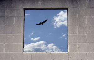 FreedomBird